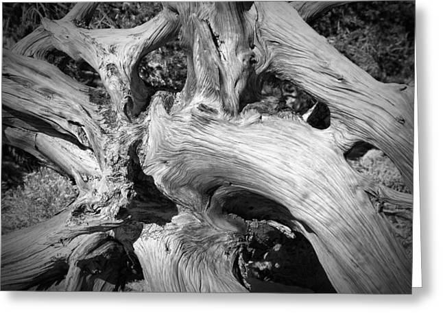 Bristlecone Pine Roots White Mountains Ca Greeting Card by Troy Montemayor