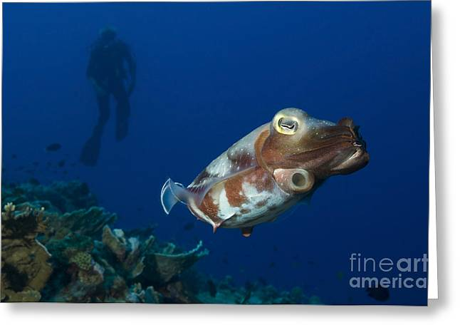 Broadclub Cuttlefish With Diver, Papua Greeting Card by Steve Jones