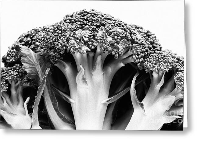 Broccoli Greeting Cards - Broccoli on white background Greeting Card by Gaspar Avila