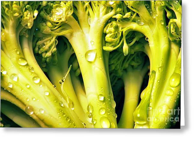 Broccoli Photographs Greeting Cards - Broccoli Scape I Greeting Card by Nancy Mueller