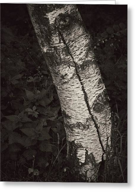 Birch Tree Greeting Cards - Broken Skin Greeting Card by Odd Jeppesen