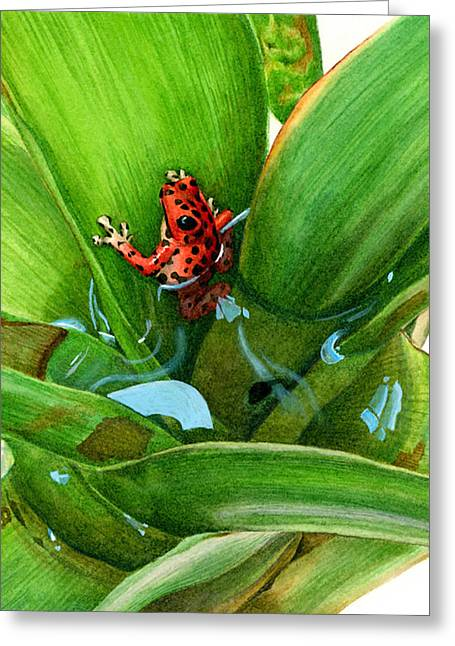 Bromeliad Greeting Cards - Bromeliad Microhabitat Greeting Card by Logan Parsons