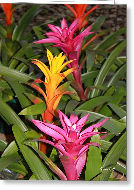 Bromeliad Photographs Greeting Cards - Bromeliad Tree Greeting Card by Suzanne Gaff