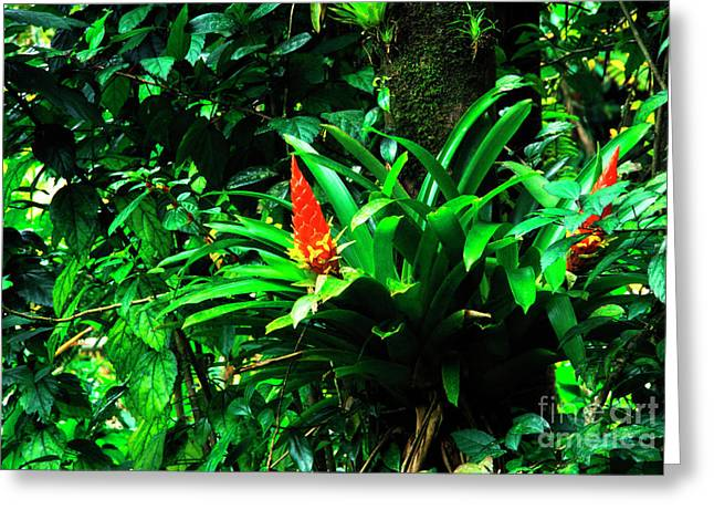 Epiphytic Bromeliads Greeting Cards - Bromeliads El Yunque  Greeting Card by Thomas R Fletcher