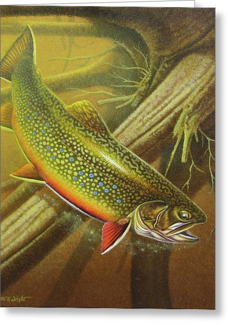 Trout Fishing Paintings Greeting Cards - Brook Trout Cover Greeting Card by JQ Licensing