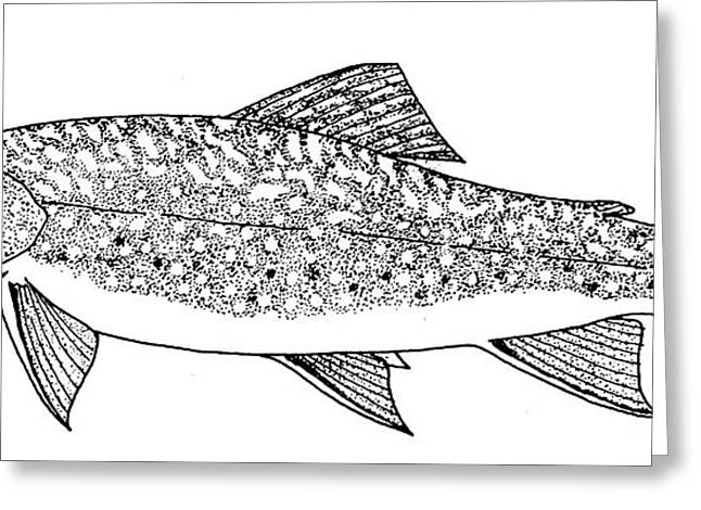 Aquatic Greeting Cards - Brook Trout Greeting Card by Granger