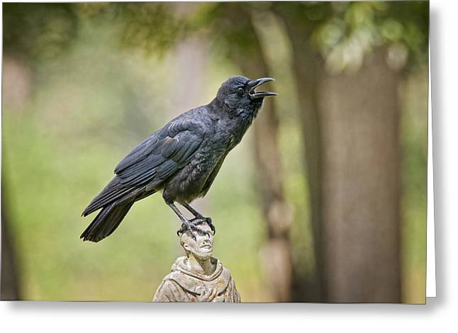 American Crow Greeting Cards - Brother Crow on St. Francis Head Greeting Card by Bonnie Barry