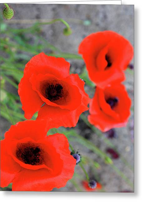 Abstract Digital Photographs Greeting Cards - Brothers of Red Greeting Card by Jerry Cordeiro