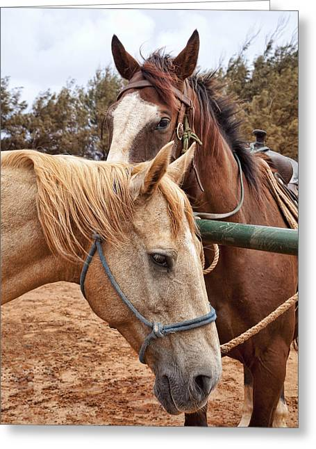 Brown Horse Photographs Greeting Cards - Brown and Tan Greeting Card by Kelley King