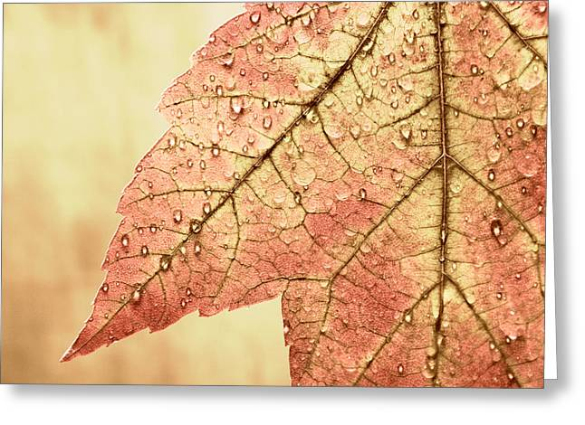 Crisp Greeting Cards - Brown Autumn Greeting Card by Carol Leigh