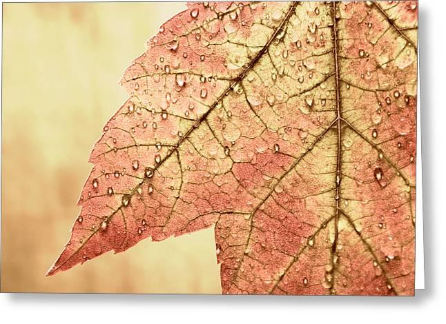 Brown Autumn Greeting Card by Carol Leigh