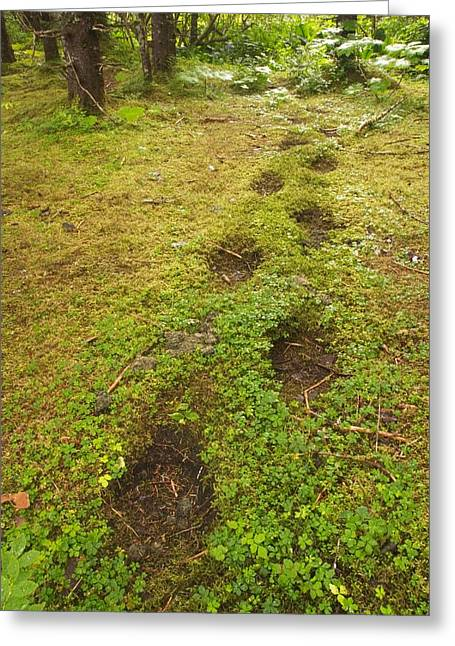 Bear Tracks Greeting Cards - Brown Bear Tracks In Soft Earth Greeting Card by Ralph Lee Hopkins