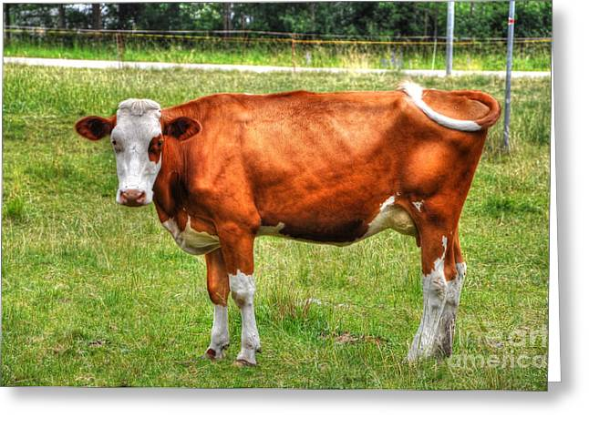 One Cow Greeting Cards - Brown cow Greeting Card by Mats Silvan