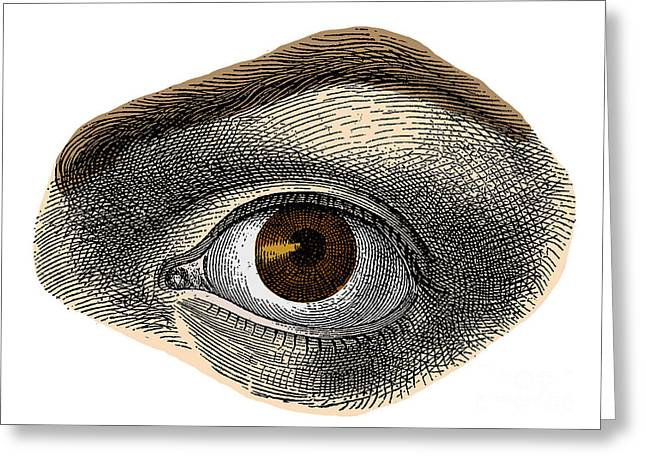 Sight See Greeting Cards - Brown Eye Greeting Card by Science Source