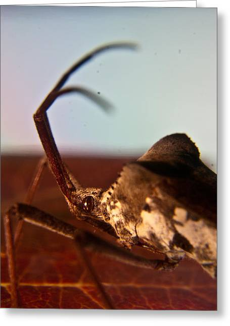 Fiend Greeting Cards - Brown-Eyed Bug Greeting Card by Douglas Barnett