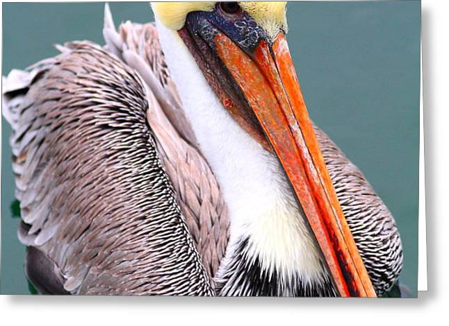 Brown Pelican . 7D8291 Greeting Card by Wingsdomain Art and Photography