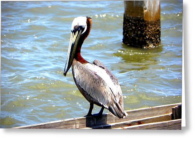 Cedar Key Greeting Cards - Brown Pelican and Blue Seas Greeting Card by Sheri McLeroy