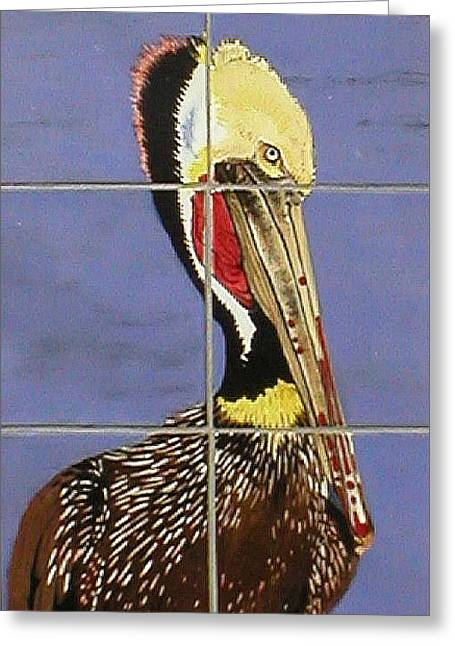 Sea Ceramics Greeting Cards - Brown Pelican Greeting Card by Dy Witt
