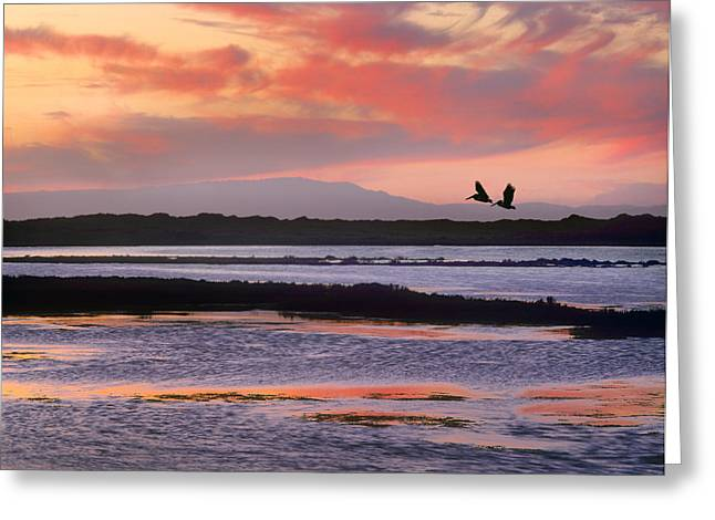 Moss Landing California Greeting Cards - Brown Pelican Pair Flying At Moss Greeting Card by Tim Fitzharris