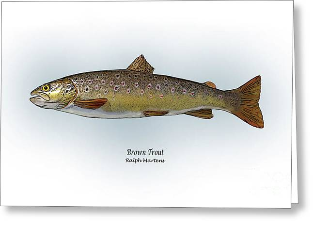 Trout Fishing Drawings Greeting Cards - Brown Trout Greeting Card by Ralph Martens