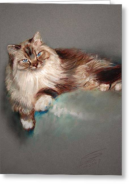 Domestic Cat Greeting Cards - Browny White Greeting Card by Ylli Haruni