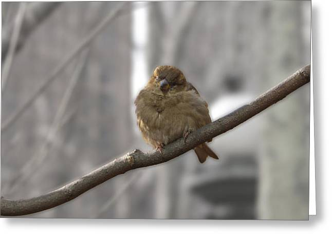 Bryant Park Bird NYC Greeting Card by Henri Irizarri