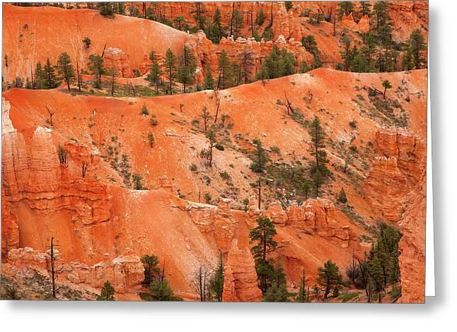 Ponderosa Pine Greeting Cards - Bryce Canyon Hoodoos and Ponderosa Pines Greeting Card by John Stephens