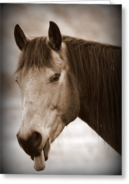 Ranch Photographs Greeting Cards - Buck Being Sassy Greeting Card by Tam Graff