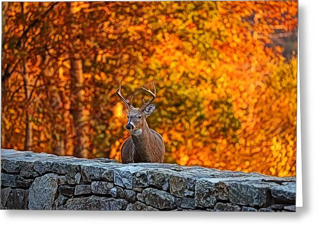 Fall Digital Art Greeting Cards - Buck Digital Painting - 01 Greeting Card by Metro DC Photography