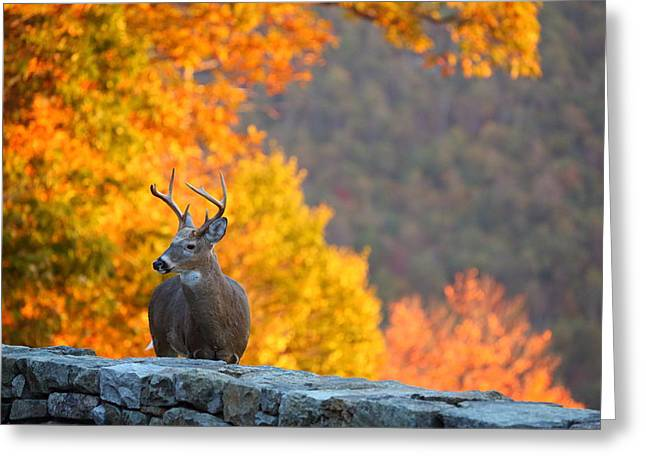 Antlers Greeting Cards - Buck in the Fall 04 Greeting Card by Metro DC Photography