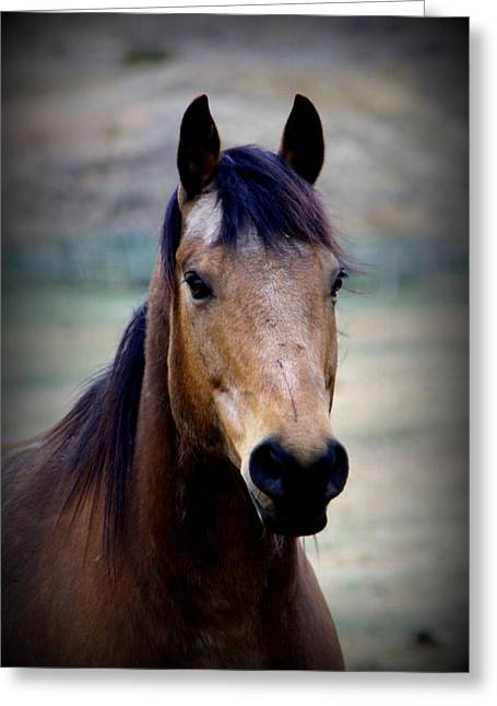 Ranch Photographs Greeting Cards - Buck Greeting Card by Tam Graff
