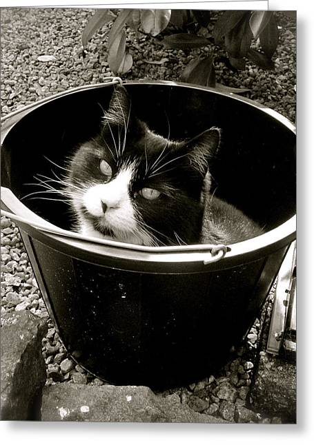 Cute Cat Pyrography Greeting Cards - Bucket Head Greeting Card by John O Doherty