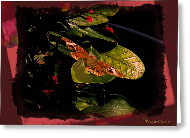 Tn Digital Art Greeting Cards - BUCKEYE BUTTERFLY on CROWN of Thorns Greeting Card by EricaMaxine  Price