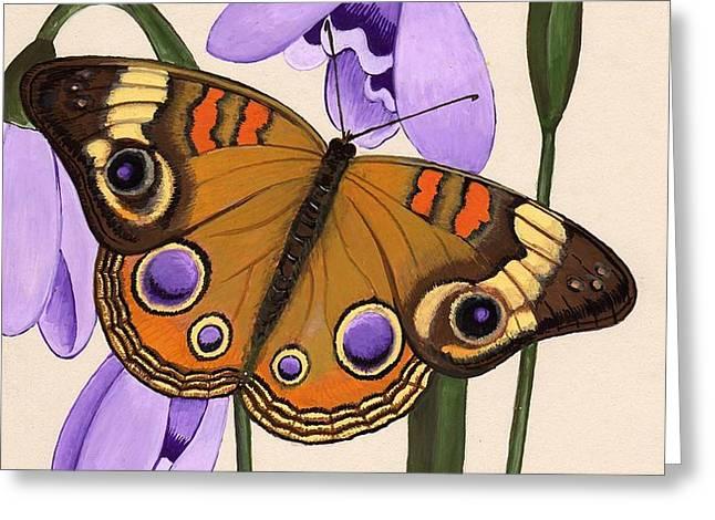 Buckeye Greeting Card by Jeanne Rehrig