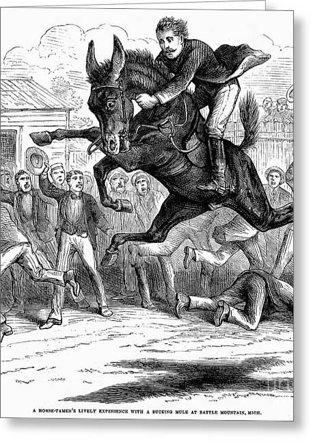 Tamer Greeting Cards - Bucking Mule, 1879 Greeting Card by Granger
