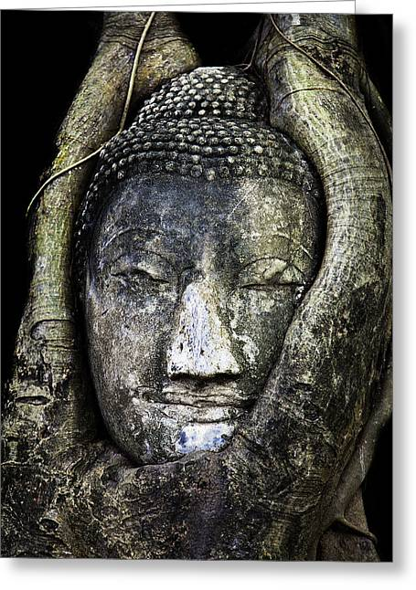 Ancient Art Greeting Cards - Buddha Head in Banyan Tree Greeting Card by Adrian Evans