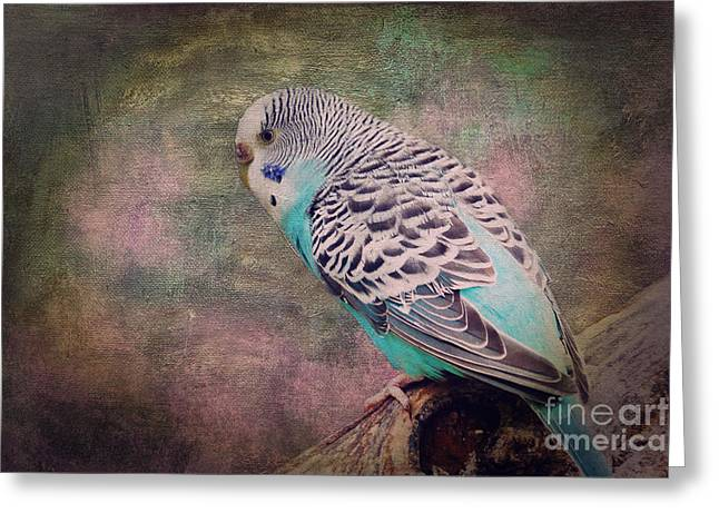 Socialize Greeting Cards - Budgie Greeting Card by Angela Doelling AD DESIGN Photo and PhotoArt