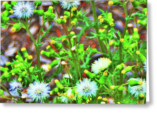 Dandilion Greeting Cards - Buds Greeting Card by Bill Cannon