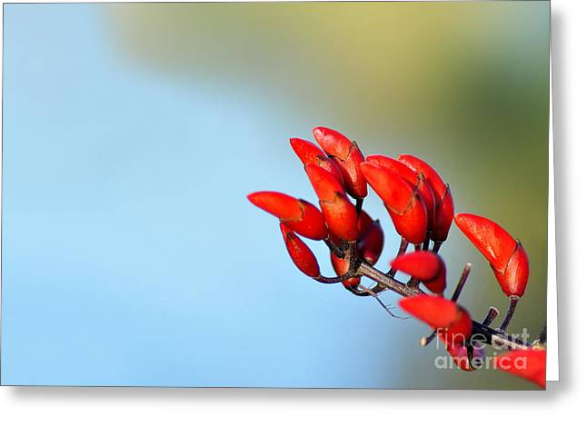 Red Bud Trees Greeting Cards - Buds in the Sky Greeting Card by Kaye Menner