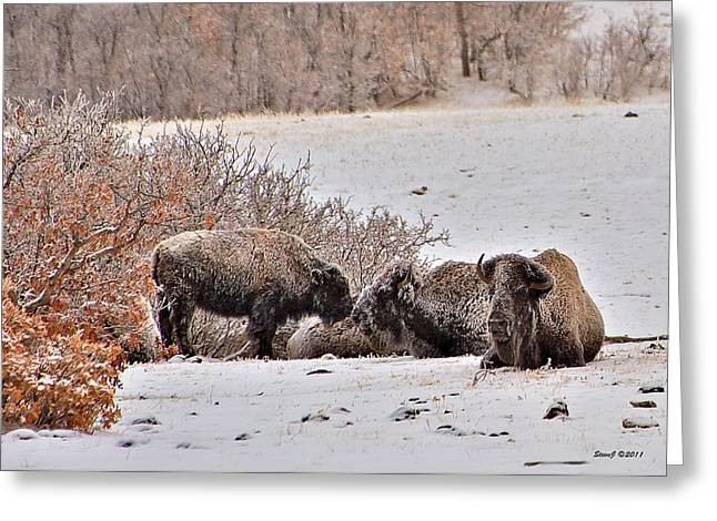 Buffalo Braving The Winter Cold Greeting Card by Stephen  Johnson