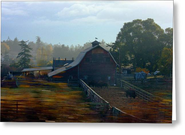 Framed Whidbey Prints Greeting Cards - Buffalo Ranch on Whidbey Greeting Card by Marie Jamieson