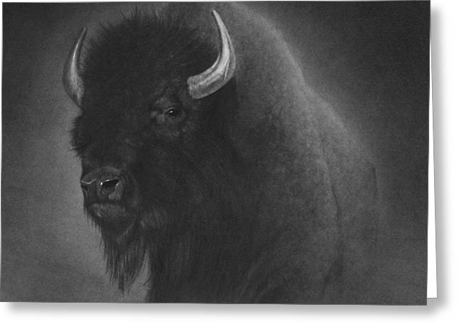 Graphite Art Drawings Greeting Cards - Buffalo Greeting Card by Tim Dangaran