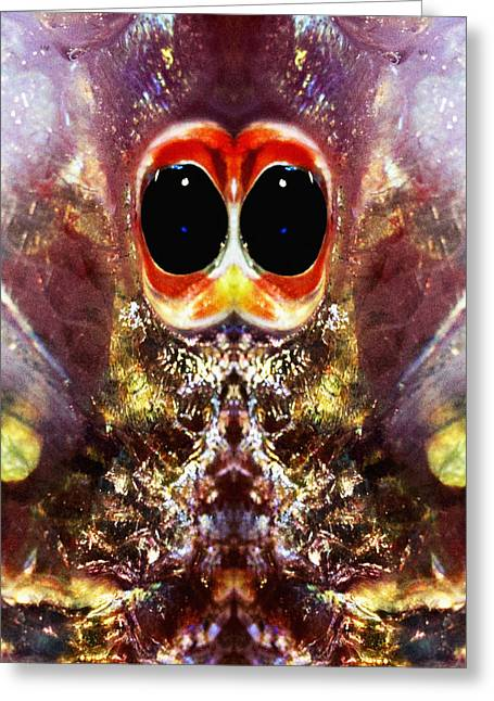 Storm Prints Photographs Greeting Cards - Bug Eyes Greeting Card by Skip Nall