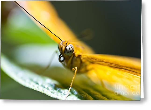 Bug Out Greeting Card by Leslie Leda