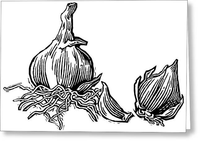 Linocut Greeting Cards - Bulbs Of Garlic, Woodcut Greeting Card by Gary Hincks