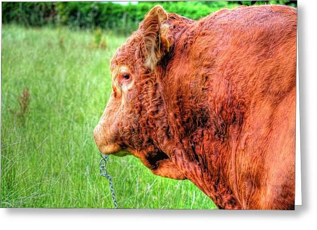 Bull Greeting Card by Barry R Jones Jr