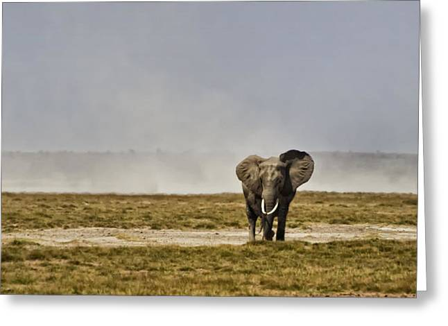 On The Plains Greeting Cards - Bull Elephant in Kenya Greeting Card by Marion McCristall