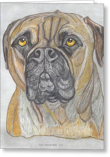 Puppies Drawings Greeting Cards - Bull Mastiff Greeting Card by Don  Gallacher