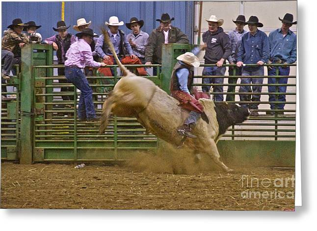 Brahma Bull Greeting Cards - Bull Rider 2 Greeting Card by Sean Griffin