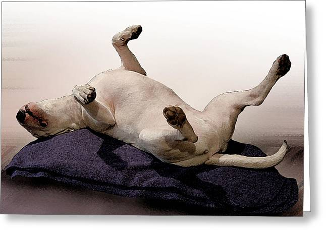 Bull Terrier Greeting Cards - Bull Terrier Dreams Greeting Card by Michael Tompsett
